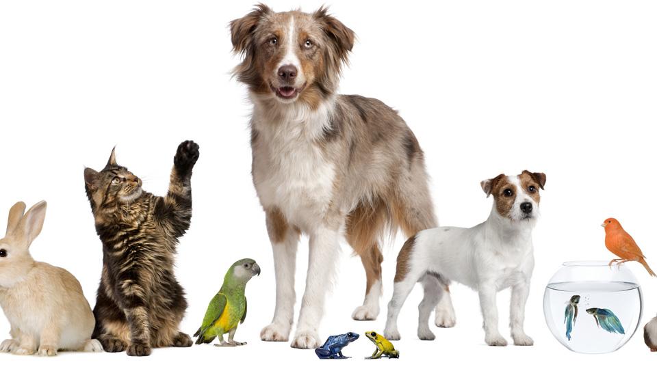Las 10 mejores mascotas para el hogar