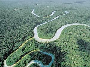 Los 10 bosques más importantes del mundo