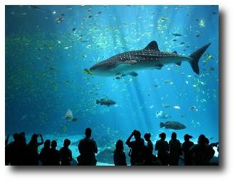 Los 10 acuarios más grandes del mundo