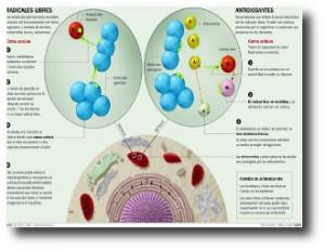 8. Antioxidantes