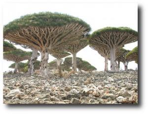 1. Archipi+®lago de Socotra