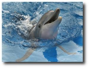 2. Delfines