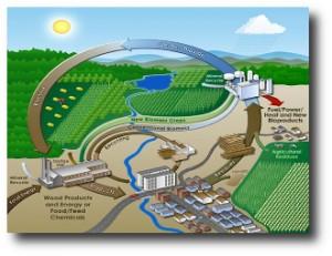 4. Bioenerg+¡a
