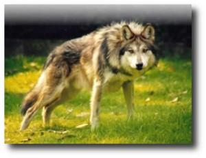 4. Cuidarse de animales salvajes