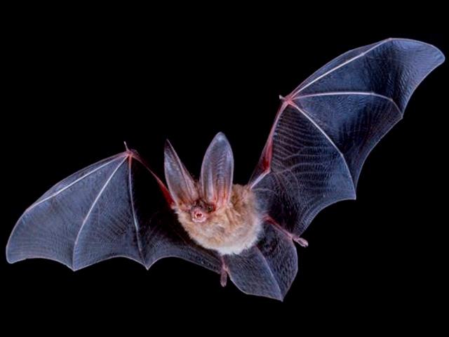 The Bat! - новая вышедшая версия почтового клиента. Поддерживаеся.