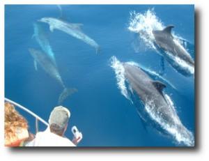 2. Avistamiento de delfines