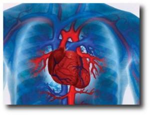 5. Enfermedades cardiovasculares