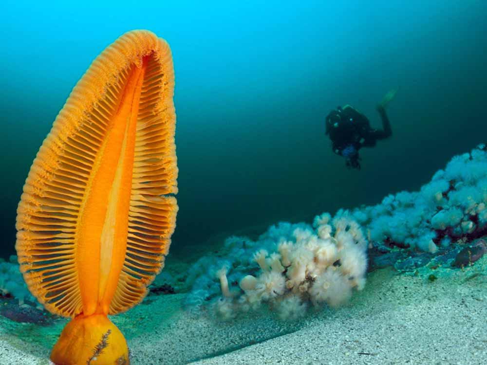 British Columbia Diving