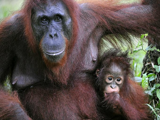 Las 10 mejores madres del reino animal