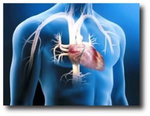 7. Mejora el rendimiento cardiovascular
