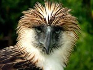 Las 10 más poderosas aves de presa en el mundo