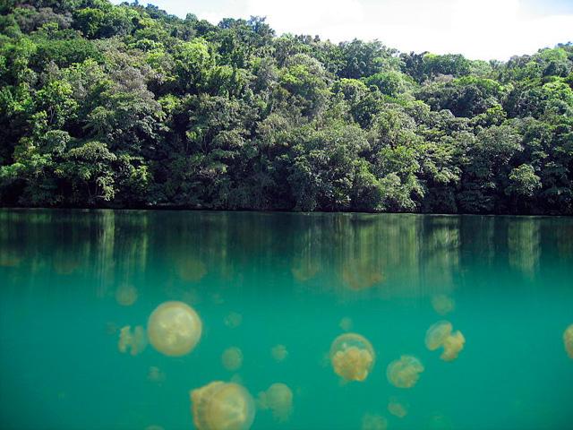 Lago de las medusas