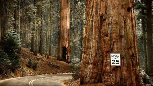 Paque Nacional Sequoia