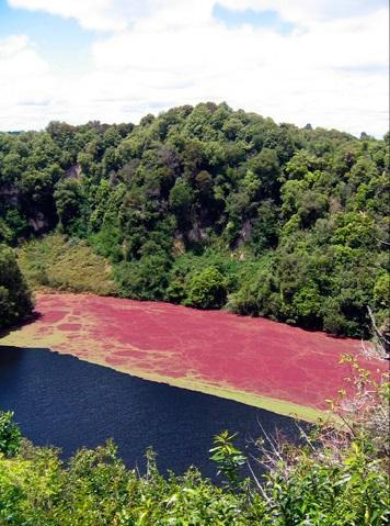 lagos del valle volcánico de Waimangu
