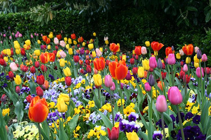 Fragante o floral