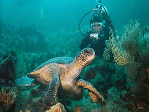 Las 10 cosas que debes ver en las Islas Galápagos