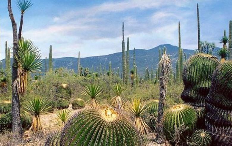 Bosques de cactus