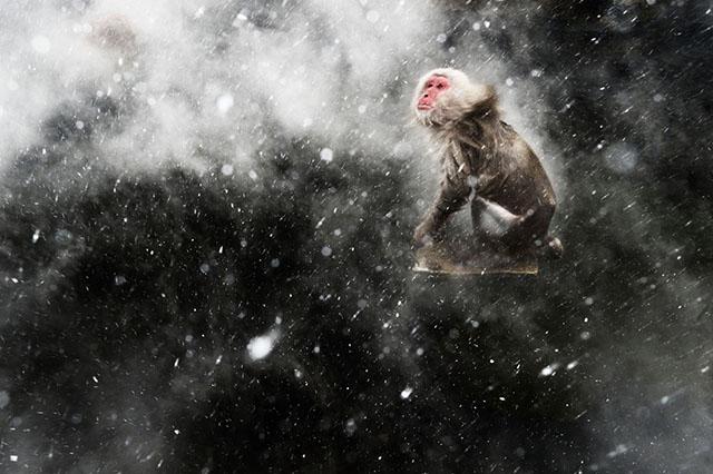 Macaco en las aguas termales de Jigokudani, Japón