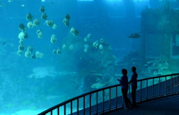 Mayor acuario del mundo