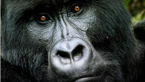 Los 10 mejores safaris africanos