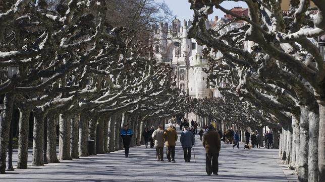 Los 10 túneles de árboles más extraordinarios del mundo