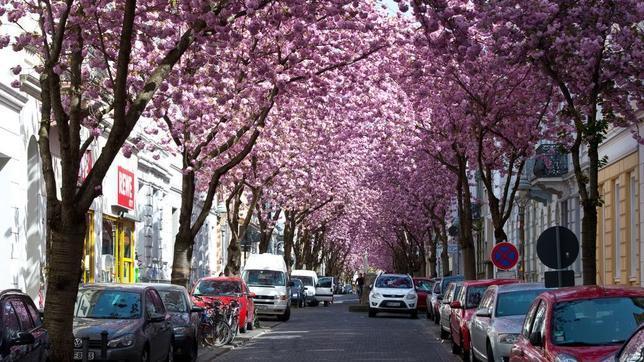 Túnel de los cerezos