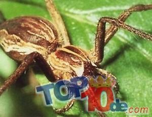 Las 10 más asombrosos animales sin ojos