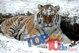 Los 10 animales más cazados en el mundo