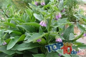 Los 10 mejores remedios caseros para los moretones
