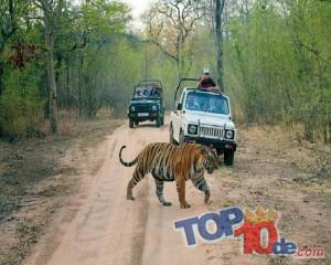Los 10 mejores santuarios de vida salvaje en la India