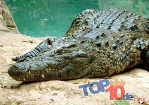 Los 10 animales que hay que ver al visitar África