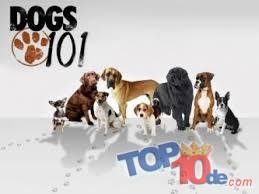 Las 10 mejores series de televisión de Animal Planet